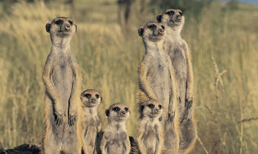 Animal Behavior Bio 3012 :: animal behavior